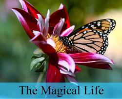 The Magical Life